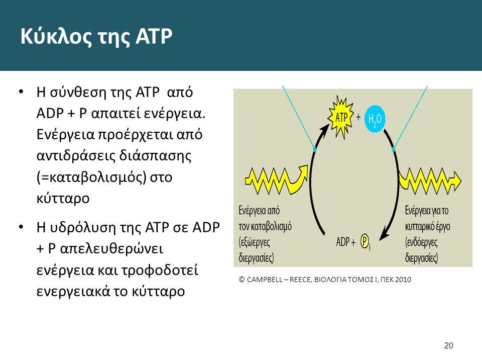 Κύκλος της ATP Η σύνθεση της ΑΤΡ από ADP + P απαιτεί ενέργεια. Ενέργεια προέρχεται από αντιδράσεις διάσπασης (=καταβολισμός) στο κύτταρο Η υδρόλυση τη