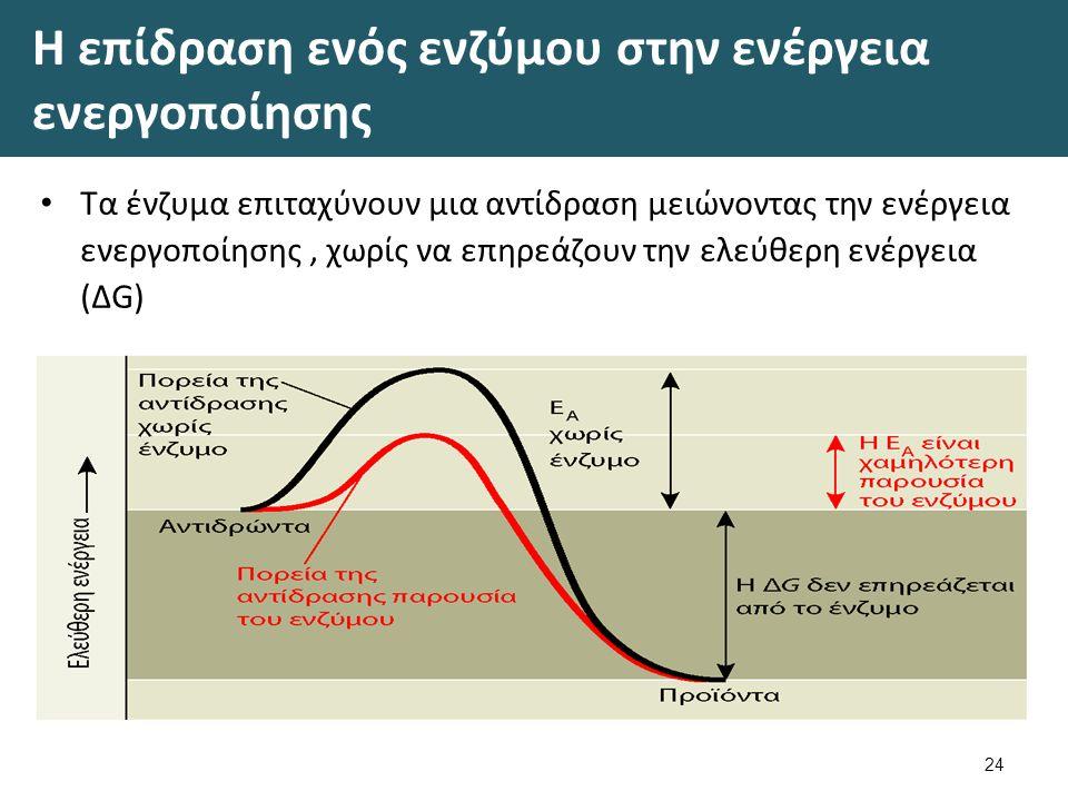 Η επίδραση ενός ενζύμου στην ενέργεια ενεργοποίησης Τα ένζυμα επιταχύνουν μια αντίδραση μειώνοντας την ενέργεια ενεργοποίησης, χωρίς να επηρεάζουν την ελεύθερη ενέργεια (ΔG) 24