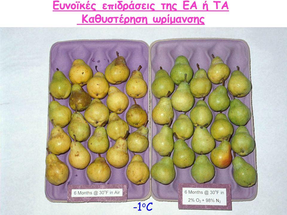 Ευνοϊκές επιδράσεις της ΕΑ ή ΤΑ Καθυστέρηση ωρίμανσης -1oC-1oC