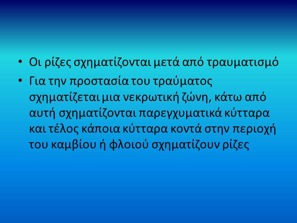 Ε) ΠΕΡΙΒΑΛΛΟΝΤΙΚΕΣ ΣΥΝΘΗΚΕΣ ΡΙΖΟΒΟΛΙΑΣ ΣΤ) ΝΕΡΟ (απαραίτητη υδρονέφωση στα φυλλοφόρα μοσχεύματα, αιτιολόγηση) Ζ) ΘΕΡΜΟΚΡΑΣΙΑ (ευνοϊκή για τη ριζοβολία ή θέρμανση του υποστρώματος, πως γίνεται) Η) ΦΩΣ (η ένταση εξαρτάται από το είδος, η φωτοπερίοδος επηρεάζει έναν αριθμό ειδών στα οποία η μεγάλη φωτοπερίοδος αυξάνει την ριζοβολία) Θ) ΥΠΟΣΤΡΩΜΑ ΡΙΖΟΒΟΛΙΑΣ (χαρακτηριστικά και ιδιότητές του)