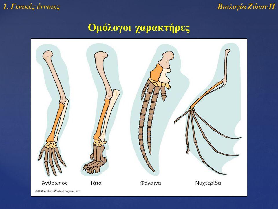 Βιολογία Ζώων ΙΙ1. Γενικές έννοιες Ομόλογοι χαρακτήρες
