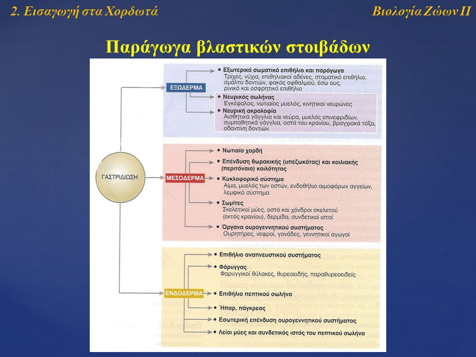 Βιολογία Ζώων ΙΙ2. Εισαγωγή στα Χορδωτά Παράγωγα βλαστικών στοιβάδων