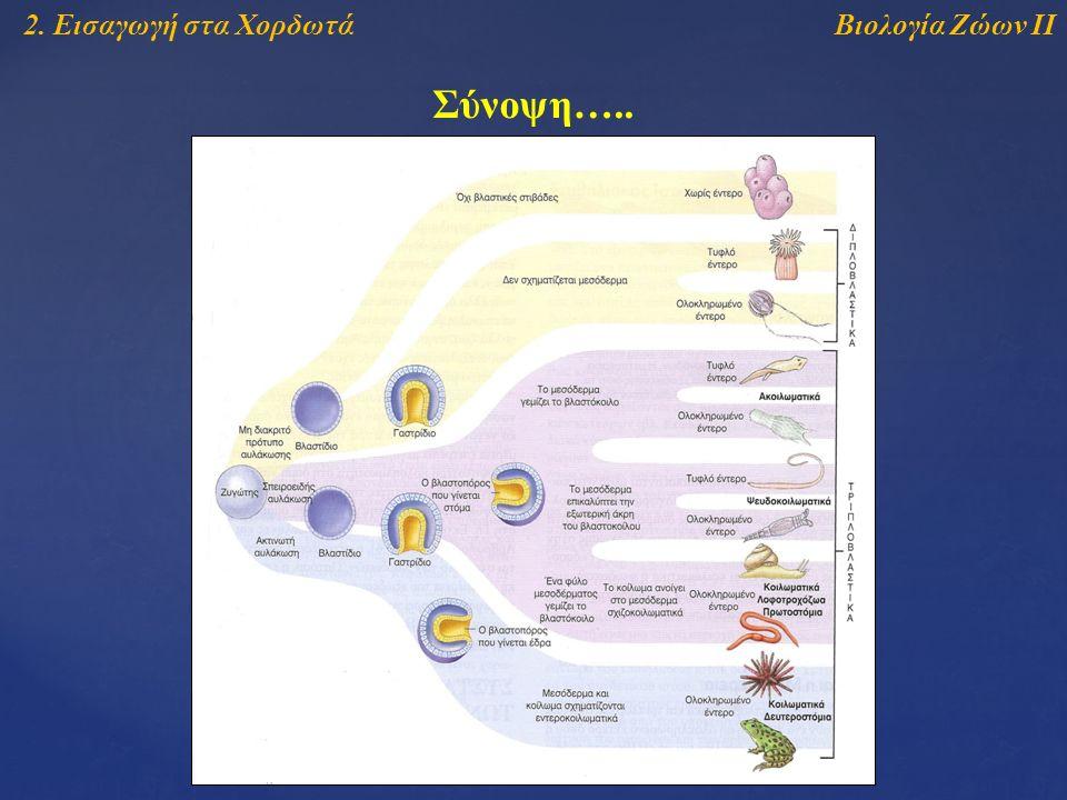 Βιολογία Ζώων ΙΙ2. Εισαγωγή στα Χορδωτά Σύνοψη…..