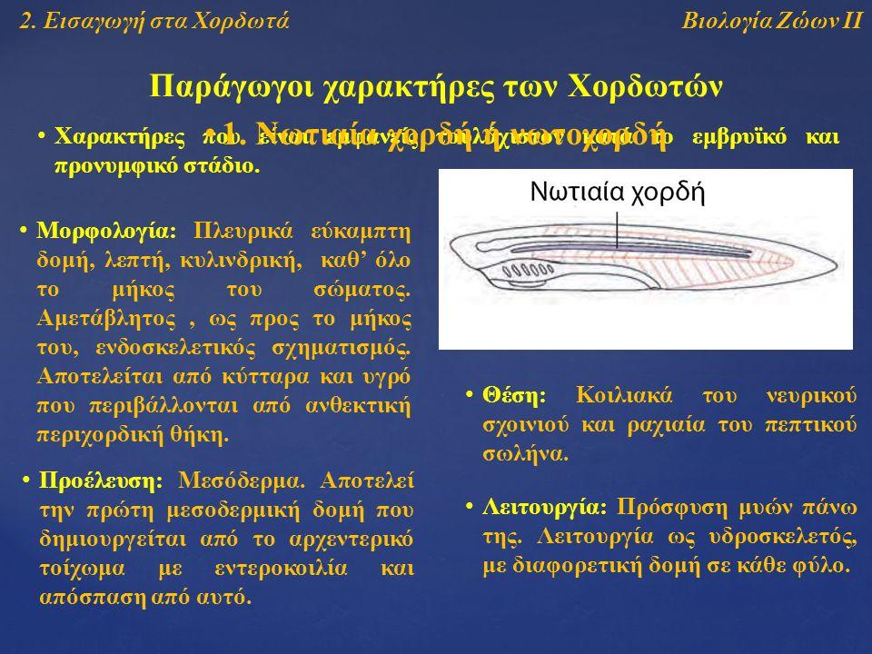 Βιολογία Ζώων ΙΙ2.