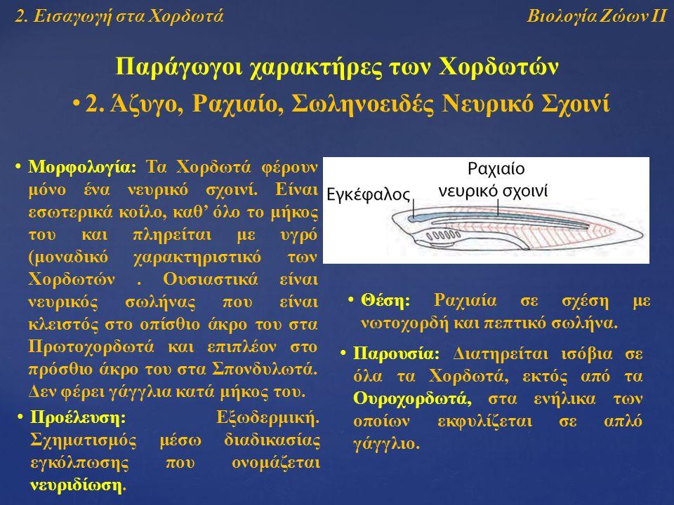 Βιολογία Ζώων ΙΙ2. Εισαγωγή στα Χορδωτά Παράγωγοι χαρακτήρες των Χορδωτών 2.