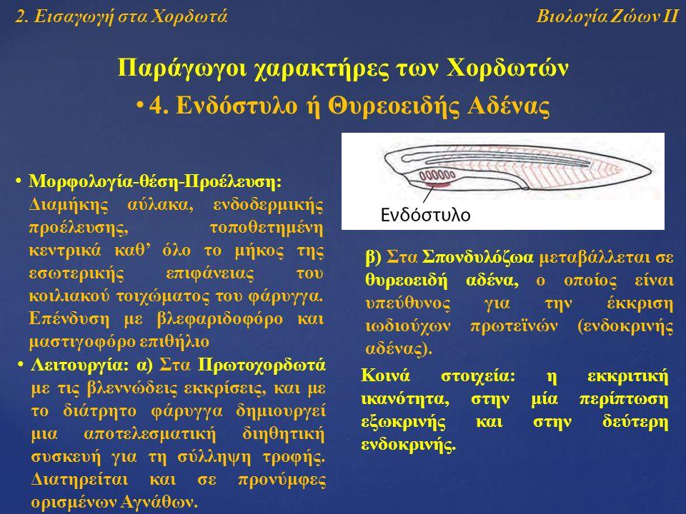 Βιολογία Ζώων ΙΙ2. Εισαγωγή στα Χορδωτά Παράγωγοι χαρακτήρες των Χορδωτών 4.