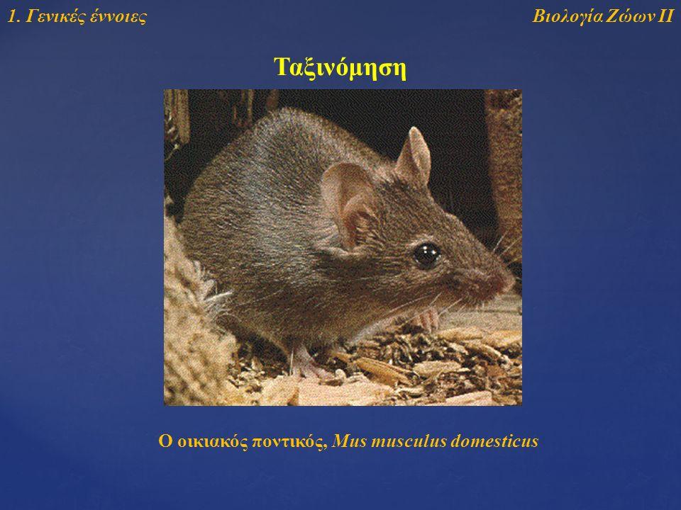 Βιολογία Ζώων ΙΙ1. Γενικές έννοιες Ταξινόμηση Ο οικιακός ποντικός, Mus musculus domesticus