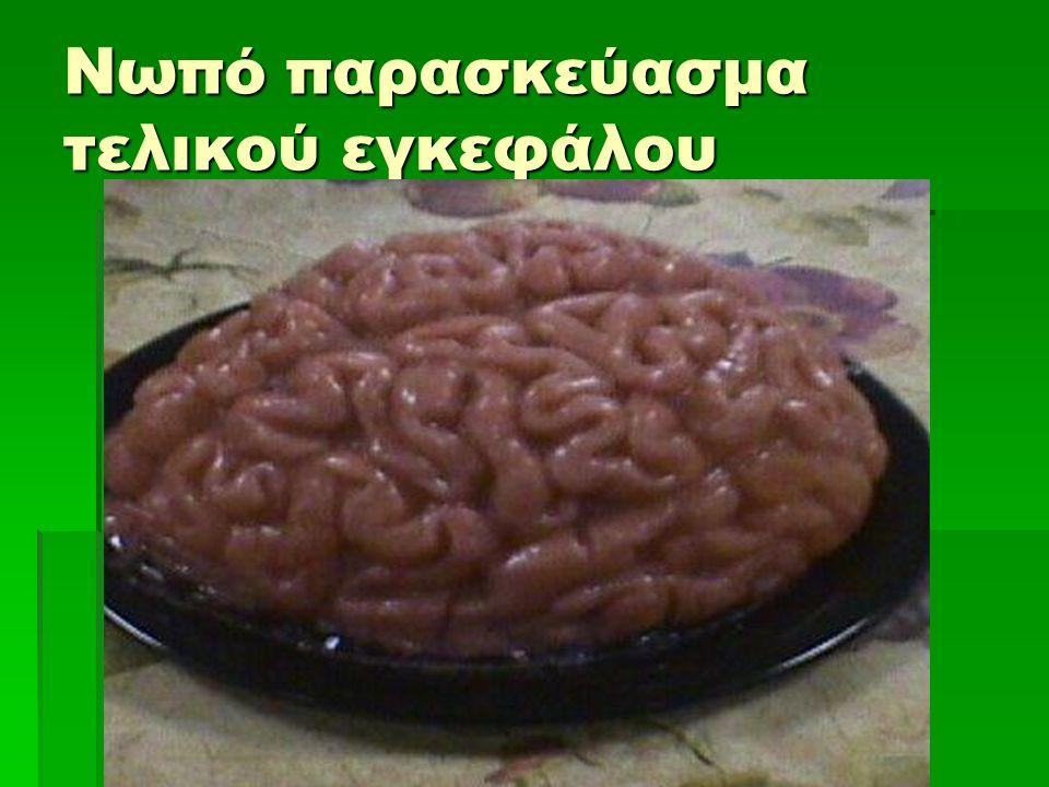 Νωπό παρασκεύασμα τελικού εγκεφάλου