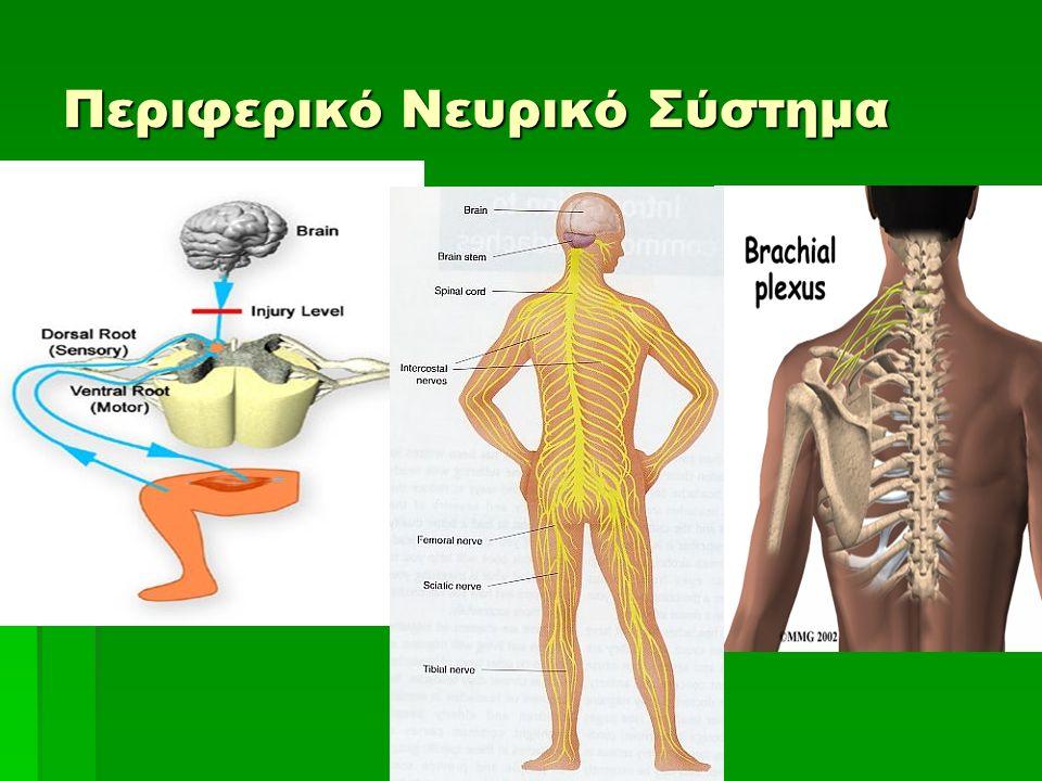 Λειτουργίες του εγκεφαλικού φλοιού  Εγκεφαλικά κέντρα
