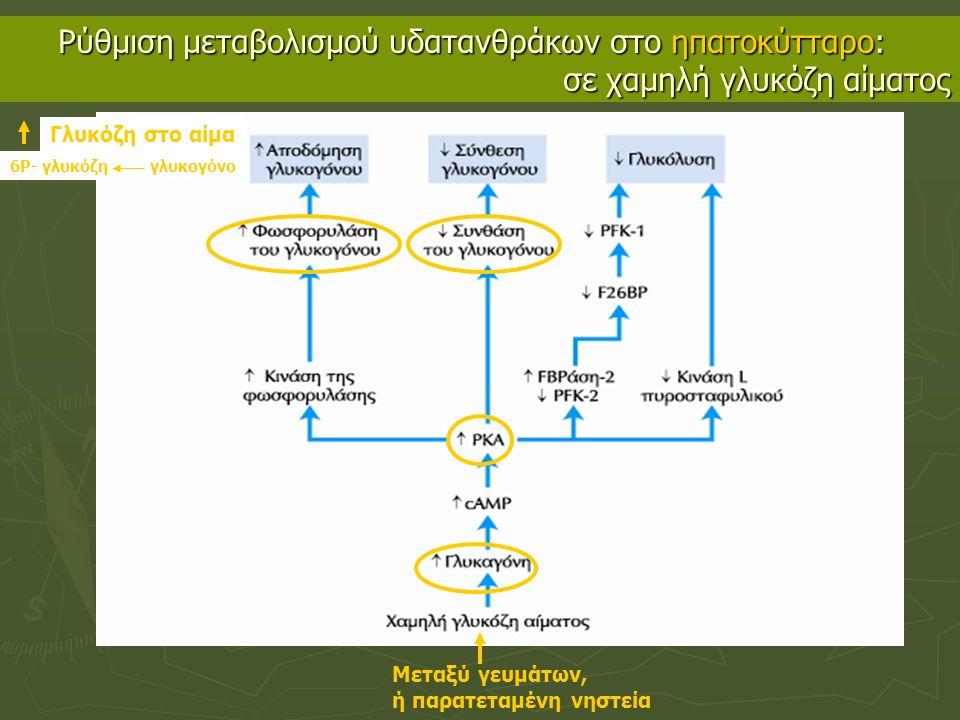 Ρύθμιση μεταβολισμού υδατανθράκων στο ηπατοκύτταρο: σε χαμηλή γλυκόζη αίματος Μεταξύ γευμάτων, ή παρατεταμένη νηστεία 6Ρ- γλυκόζη γλυκογόνο Γλυκόζη στο αίμα