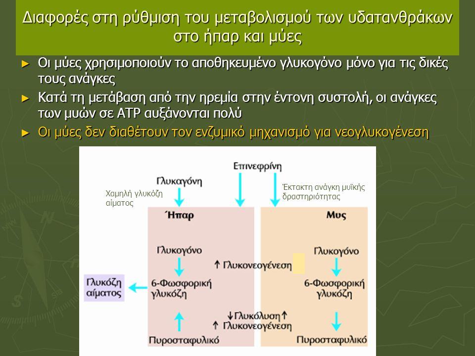 Διαφορές στη ρύθμιση του μεταβολισμού των υδατανθράκων στο ήπαρ και μύες ► Οι μύες χρησιμοποιούν το αποθηκευμένο γλυκογόνο μόνο για τις δικές τους ανάγκες ► Κατά τη μετάβαση από την ηρεμία στην έντονη συστολή, οι ανάγκες των μυών σε ΑΤΡ αυξάνονται πολύ ► Οι μύες δεν διαθέτουν τον ενζυμικό μηχανισμό για νεογλυκογένεση Έκτακτη ανάγκη μυϊκής δραστηριότητας Χαμηλή γλυκόζη αίματος