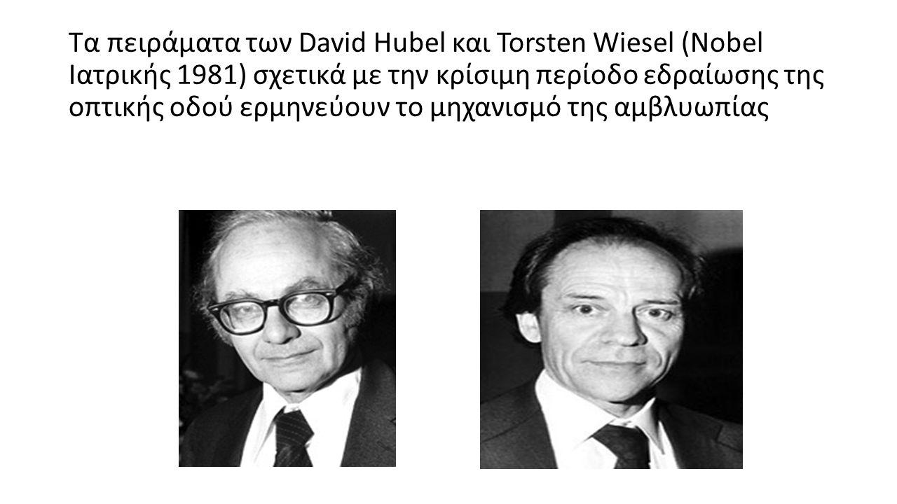 Τα πειράματα των David Hubel και Torsten Wiesel (Nobel Ιατρικής 1981) σχετικά με την κρίσιμη περίοδο εδραίωσης της οπτικής οδού ερμηνεύουν το μηχανισμό της αμβλυωπίας