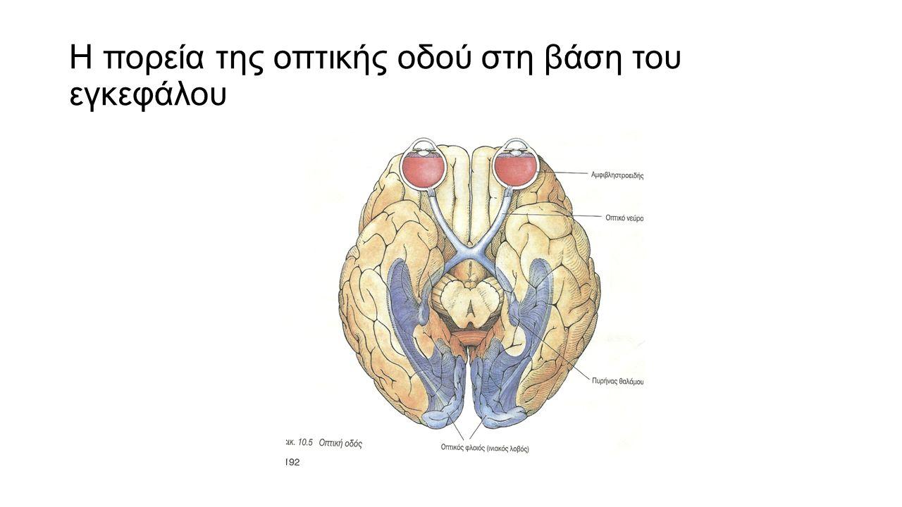 Η πορεία της οπτικής οδού στη βάση του εγκεφάλου