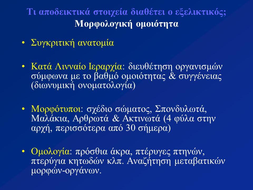 Τι αποδεικτικά στοιχεία διαθέτει ο εξελικτικός; Μορφολογική ομοιότητα Συγκριτική ανατομία Κατά Λινναίο Ιεραρχία: διευθέτηση οργανισμών σύμφωνα με το βαθμό ομοιότητας & συγγένειας (διωνυμική ονοματολογία) Μορφότυποι: σχέδιο σώματος, Σπονδυλωτά, Μαλάκια, Αρθρωτά & Ακτινωτά (4 φύλα στην αρχή, περισσότερα από 30 σήμερα) Ομολογία: πρόσθια άκρα, πτέρυγες πτηνών, πτερύγια κητωδών κλπ.