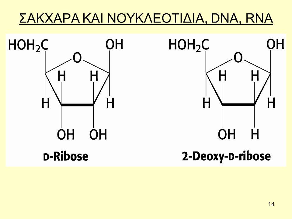 14 ΣΑΚΧΑΡΑ ΚΑΙ ΝΟΥΚΛΕΟΤΙΔΙΑ, DNA, RNA