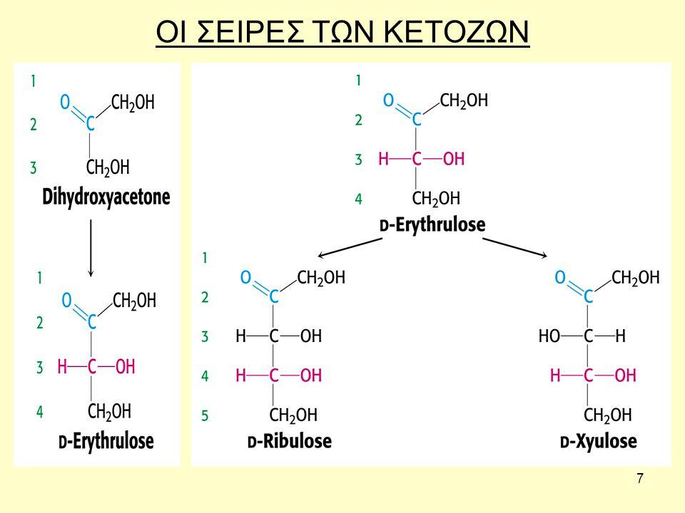 28 Πολυσακχαρίτες Το μόριο των πολυσακχαριτών αποτελείται από μεγάλο αριθμό μορίων μονοσακχαριτών ενωμένα μεταξύ τους με γλυκοζιτικούς δεσμούς.