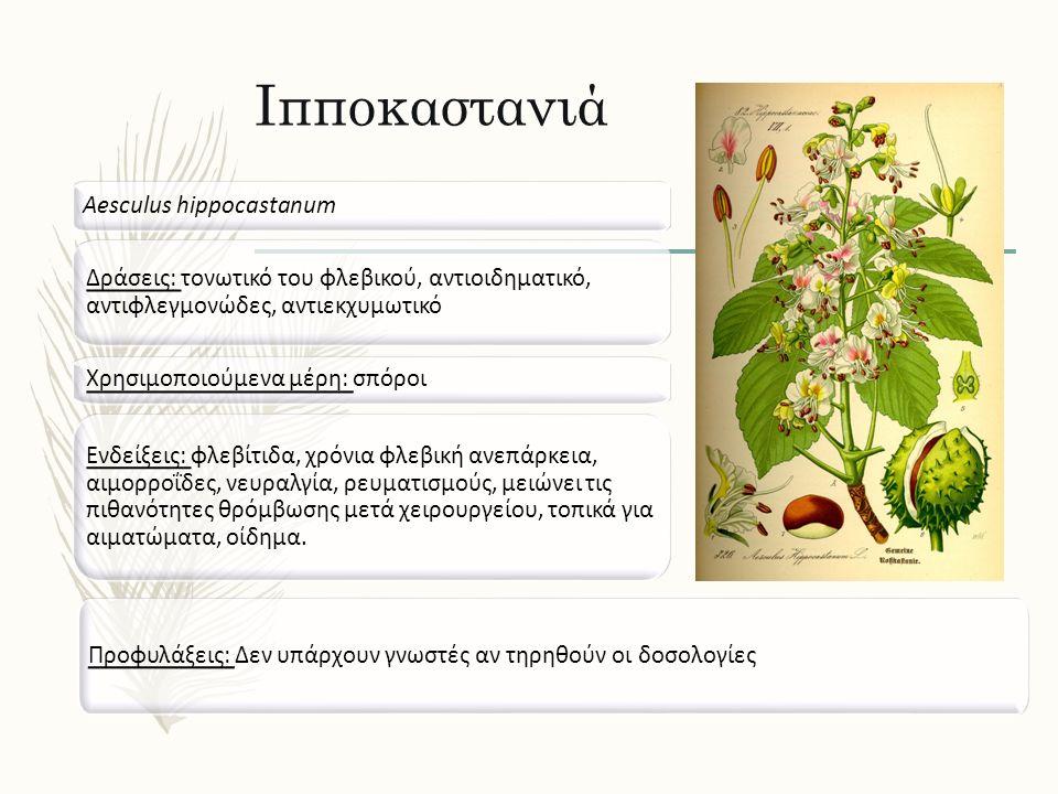 Ιπποκαστανιά Aesculus hippocastanum Δράσεις: τονωτικό του φλεβικού, αντιοιδηματικό, αντιφλεγμονώδες, αντιεκχυμωτικό Ενδείξεις: φλεβίτιδα, χρόνια φλεβι