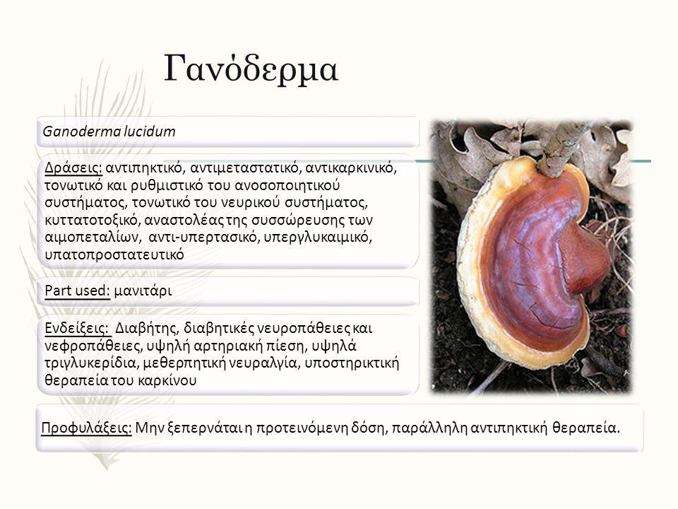 Γανόδερμα Ganoderma lucidum Δράσεις: αντιπηκτικό, αντιμεταστατικό, αντικαρκινικό, τονωτικό και ρυθμιστικό του ανοσοποιητικού συστήματος, τονωτικό του