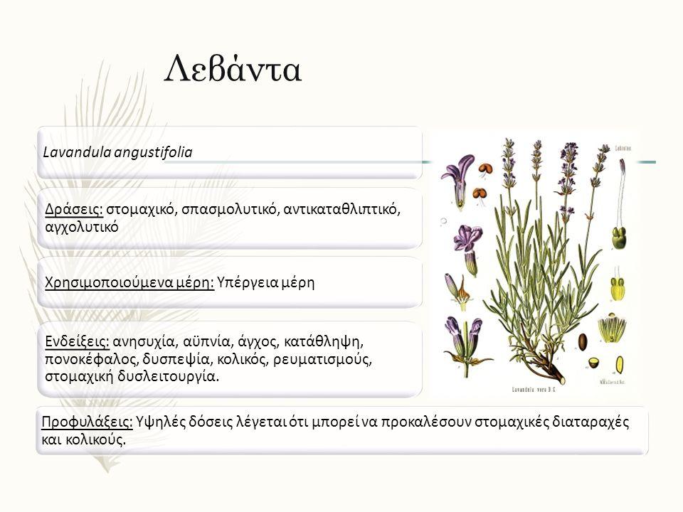 Λεβάντα Lavandula angustifolia Δράσεις: στομαχικό, σπασμολυτικό, αντικαταθλιπτικό, αγχολυτικό Ενδείξεις: ανησυχία, αϋπνία, άγχος, κατάθληψη, πονοκέφαλος, δυσπεψία, κολικός, ρευματισμούς, στομαχική δυσλειτουργία.