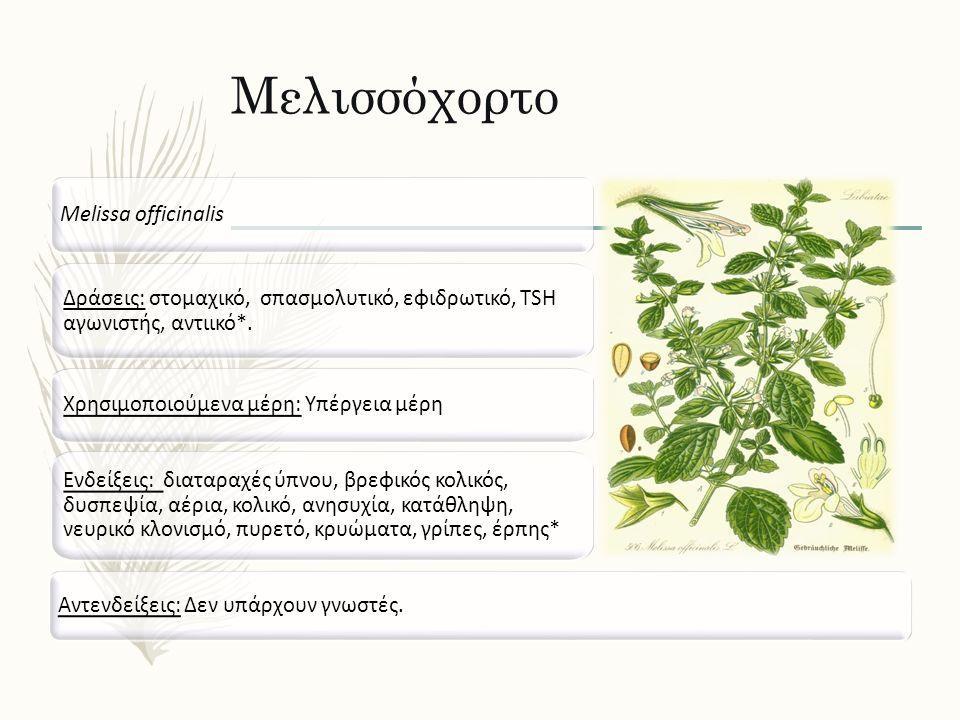 Μελισσόχορτο Melissa officinalis Δράσεις: στομαχικό, σπασμολυτικό, εφιδρωτικό, TSH αγωνιστής, αντιικό*. Ενδείξεις: διαταραχές ύπνου, βρεφικός κολικός,