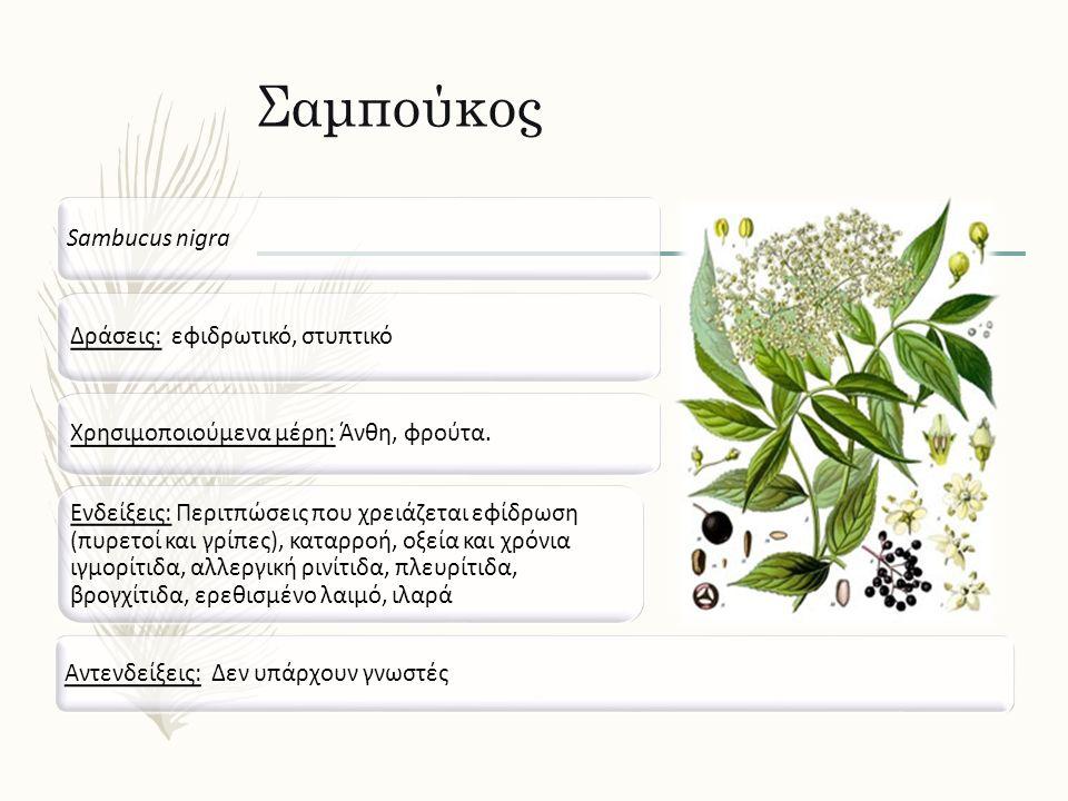 Σαμπούκος Sambucus nigra Δράσεις: εφιδρωτικό, στυπτικό Ενδείξεις: Περιτπώσεις που χρειάζεται εφίδρωση (πυρετοί και γρίπες), καταρροή, οξεία και χρόνια ιγμορίτιδα, αλλεργική ρινίτιδα, πλευρίτιδα, βρογχίτιδα, ερεθισμένο λαιμό, ιλαρά Αντενδείξεις: Δεν υπάρχουν γνωστές Χρησιμοποιούμενα μέρη: Άνθη, φρούτα.