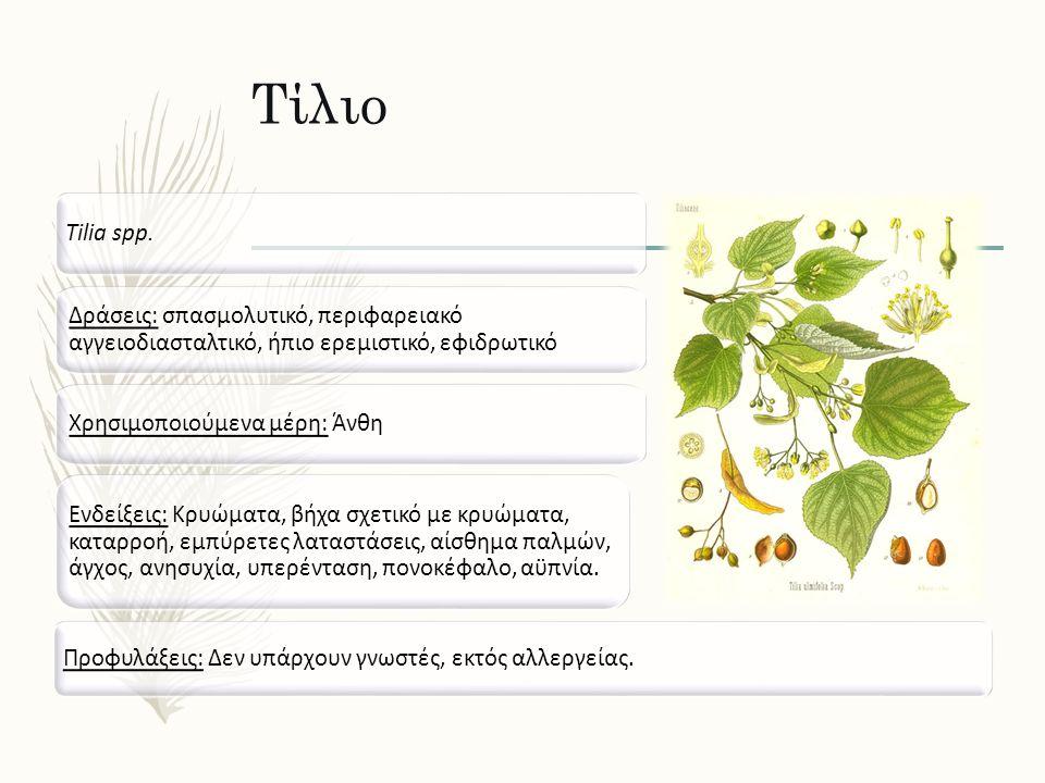 Τίλιο Tilia spp. Δράσεις: σπασμολυτικό, περιφαρειακό αγγειοδιασταλτικό, ήπιο ερεμιστικό, εφιδρωτικό Ενδείξεις: Κρυώματα, βήχα σχετικό με κρυώματα, κατ