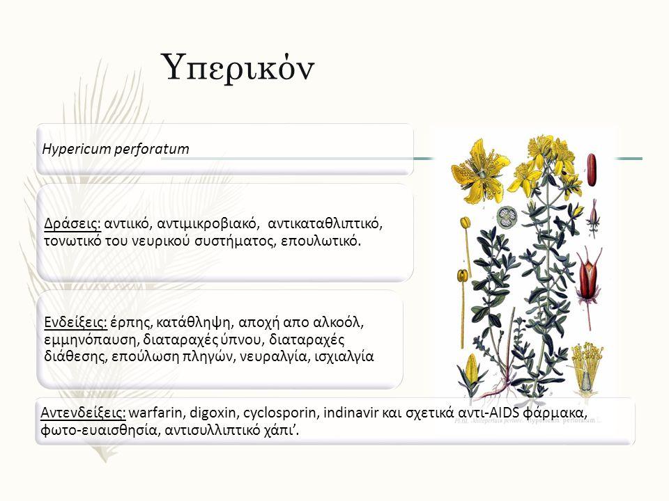 Υπερικόν Hypericum perforatum Δράσεις: αντιικό, αντιμικροβιακό, αντικαταθλιπτικό, τονωτικό του νευρικού συστήματος, επουλωτικό. Ενδείξεις: έρπης, κατά