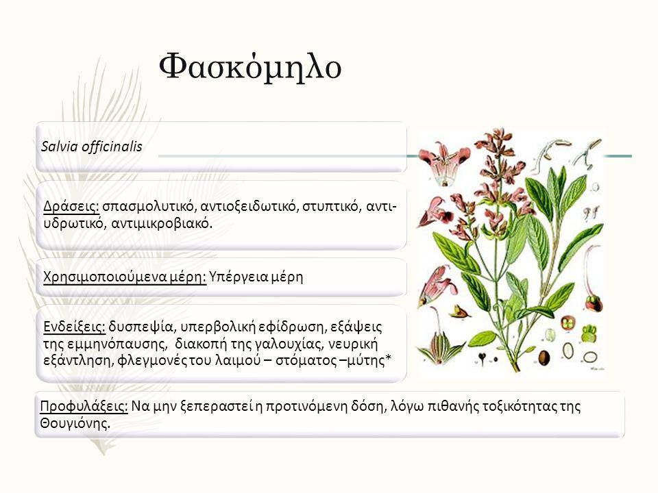 Φασκόμηλο Salvia officinalis Δράσεις: σπασμολυτικό, αντιοξειδωτικό, στυπτικό, αντι- υδρωτικό, αντιμικροβιακό. Ενδείξεις: δυσπεψία, υπερβολική εφίδρωση