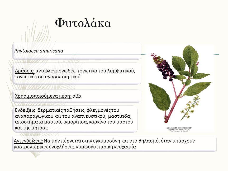 Φυτολάκα Phytolacca americana Δράσεις: αντιφλεγμονώδες, τονωτικό του λυμφατικού, τονωτικό του ανοσοποιητικού Ενδείξεις: δερματικές παθήσεις, φλεγμονές