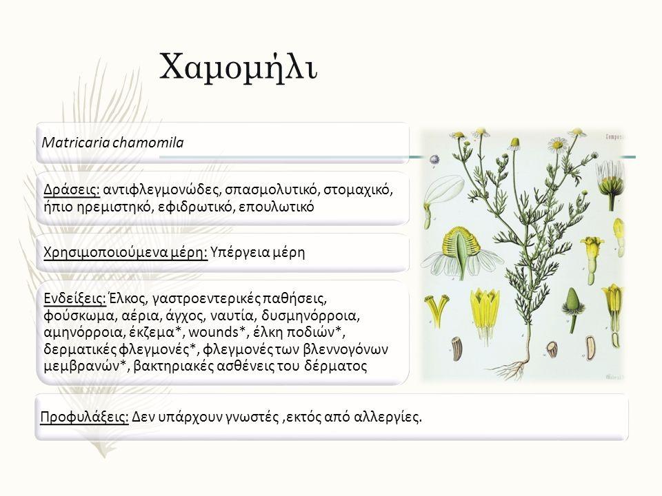 Χαμομήλι Matricaria chamomila Δράσεις: αντιφλεγμονώδες, σπασμολυτικό, στομαχικό, ήπιο ηρεμιστηκό, εφιδρωτικό, επουλωτικό Ενδείξεις: Έλκος, γαστροεντερικές παθήσεις, φούσκωμα, αέρια, άγχος, ναυτία, δυσμηνόρροια, αμηνόρροια, έκζεμα*, wounds*, έλκη ποδιών*, δερματικές φλεγμονές*, φλεγμονές των βλεννογόνων μεμβρανών*, βακτηριακές ασθένεις του δέρματος Προφυλάξεις: Δεν υπάρχουν γνωστές,εκτός από αλλεργίες.