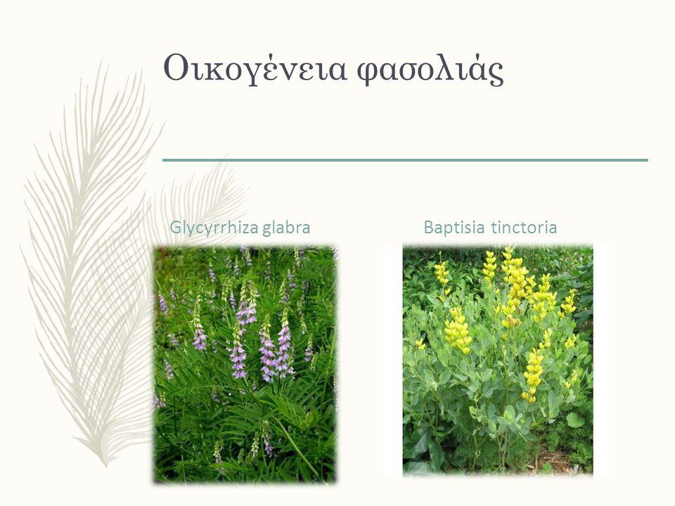 Και στα 2 τα υπέργεια ανθισμένα μέρη Agrimonia eupatoria Solidago spp. (canadensis & virgaurea)