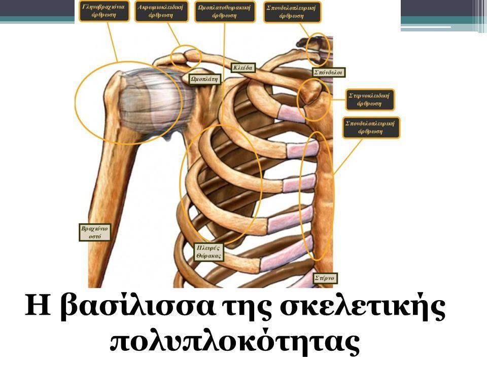 Η βασίλισσα της σκελετικής πολυπλοκότητας