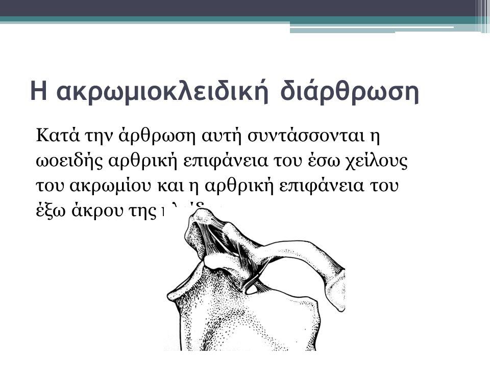Η ακρωμιοκλειδική διάρθρωση Κατά την άρθρωση αυτή συντάσσονται η ωοειδής αρθρική επιφάνεια του έσω χείλους του ακρωμίου και η αρθρική επιφάνεια του έξ
