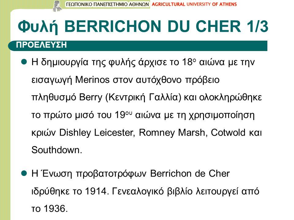 Φυλή BERRICHON DU CHER 1/3 Η δημιουργία της φυλής άρχισε το 18 ο αιώνα με την εισαγωγή Merinos στον αυτόχθονο πρόβειο πληθυσμό Berry (Κεντρική Γαλλία) και ολοκληρώθηκε το πρώτο μισό του 19 ου αιώνα με τη χρησιμοποίηση κριών Dishley Leicester, Romney Marsh, Cotwold και Southdown.