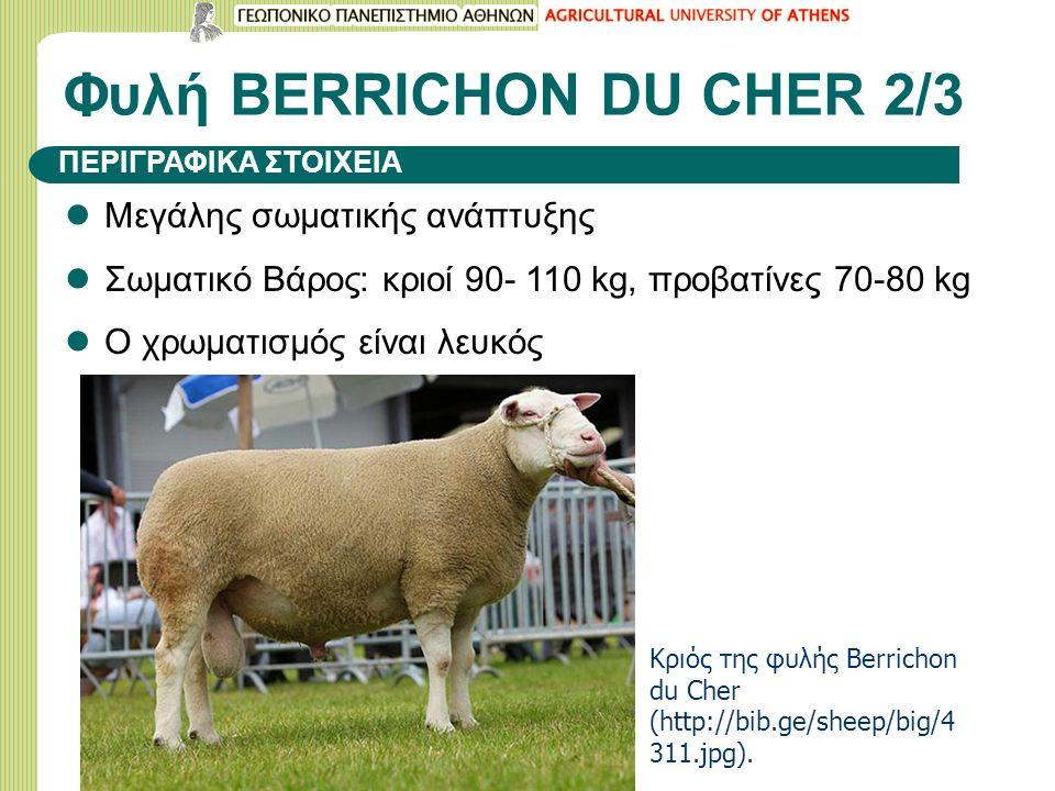 Φυλή BERRICHON DU CHER 2/3 Μεγάλης σωματικής ανάπτυξης Σωματικό Βάρος: κριοί 90- 110 kg, προβατίνες 70-80 kg Ο χρωματισμός είναι λευκός ΠΕΡΙΓΡΑΦΙΚΑ ΣΤΟΙΧΕΙΑ Κριός της φυλής Berrichon du Cher (http://bib.ge/sheep/big/4 311.jpg).