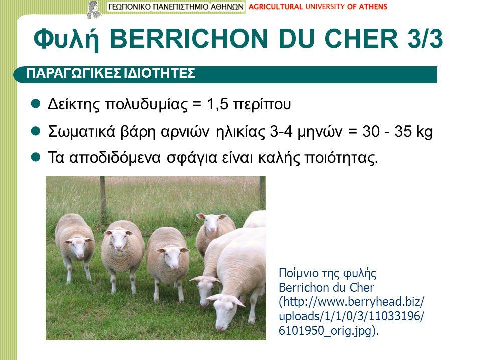 Φυλή BERRICHON DU CHER 3/3 Δείκτης πολυδυμίας = 1,5 περίπου Σωματικά βάρη αρνιών ηλικίας 3-4 μηνών = 30 - 35 kg Τα αποδιδόμενα σφάγια είναι καλής ποιότητας.