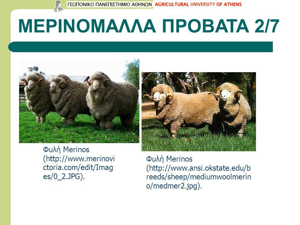 ΜΕΡΙΝΟΜΑΛΛΑ ΠΡΟΒΑΤΑ 2/7 Φυλή Merinos (http://www.merinovi ctoria.com/edit/Imag es/0_2.JPG). Φυλή Merinos (http://www.ansi.okstate.edu/b reeds/sheep/me