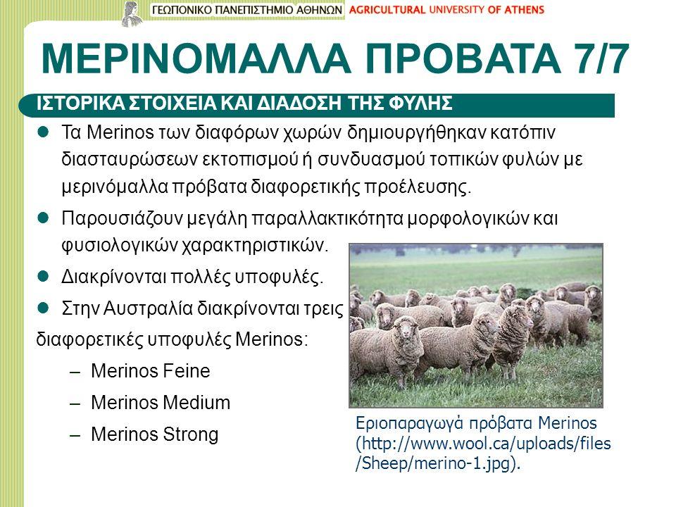 ΜΕΡΙΝΟΜΑΛΛΑ ΠΡΟΒΑΤΑ 7/7 Τα Merinos των διαφόρων χωρών δημιουργήθηκαν κατόπιν διασταυρώσεων εκτοπισμού ή συνδυασμού τοπικών φυλών με μερινόμαλλα πρόβατα διαφορετικής προέλευσης.