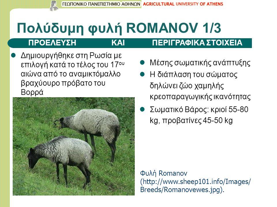 Πολύδυμη φυλή ROMANOV 1/3 Δημιουργήθηκε στη Ρωσία με επιλογή κατά το τέλος του 17 ου αιώνα από το αναμικτόμαλλο βραχύουρο πρόβατο του Βορρά Μέσης σωματικής ανάπτυξης Η διάπλαση του σώματος δηλώνει ζώο χαμηλής κρεοπαραγωγικής ικανότητας Σωματικό Βάρος: κριοί 55-80 kg, προβατίνες 45-50 kg ΠΡΟΕΛΕΥΣΗ ΚΑΙ ΠΕΡΙΓΡΑΦΙΚΑ ΣΤΟΙΧΕΙΑ Φυλή Romanov (http://www.sheep101.info/Images/ Breeds/Romanovewes.jpg).