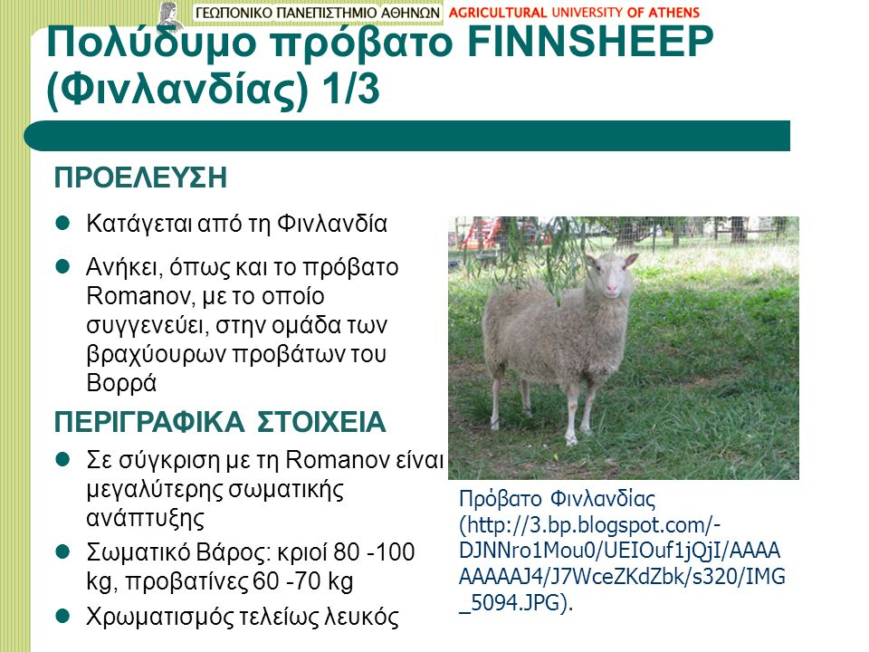 Πολύδυμο πρόβατο FINNSHEEP (Φινλανδίας) 1/3 ΠΡΟΕΛΕΥΣΗ Κατάγεται από τη Φινλανδία Ανήκει, όπως και το πρόβατο Romanov, με το οποίο συγγενεύει, στην ομάδα των βραχύουρων προβάτων του Βορρά ΠΕΡΙΓΡΑΦΙΚΑ ΣΤΟΙΧΕΙΑ Σε σύγκριση με τη Romanov είναι μεγαλύτερης σωματικής ανάπτυξης Σωματικό Βάρος: κριοί 80 -100 kg, προβατίνες 60 -70 kg Χρωματισμός τελείως λευκός Πρόβατο Φινλανδίας (http://3.bp.blogspot.com/- DJNNro1Mou0/UEIOuf1jQjI/AAAA AAAAAJ4/J7WceZKdZbk/s320/IMG _5094.JPG).