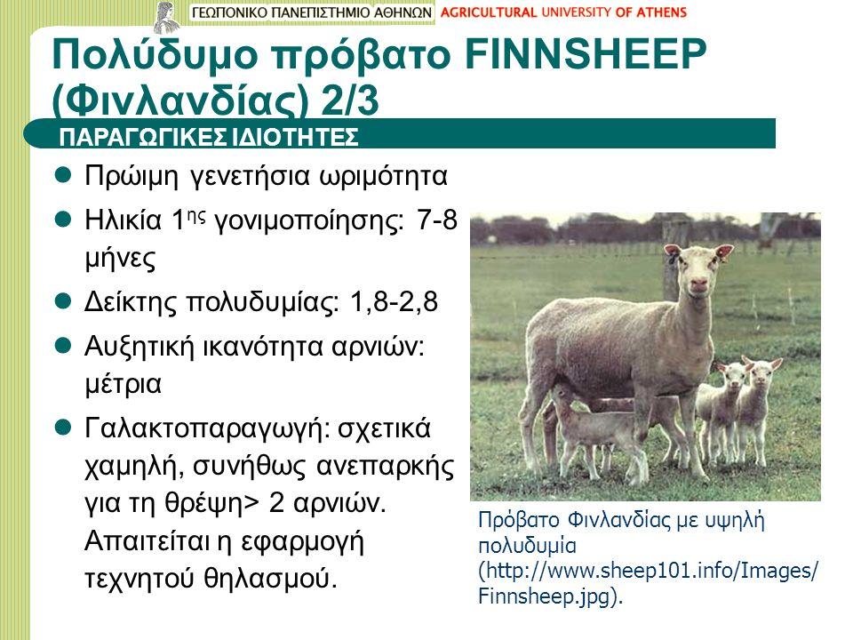 Πολύδυμο πρόβατο FINNSHEEP (Φινλανδίας) 2/3 Πρώιμη γενετήσια ωριμότητα Ηλικία 1 ης γονιμοποίησης: 7-8 μήνες Δείκτης πολυδυμίας: 1,8-2,8 Αυξητική ικανότητα αρνιών: μέτρια Γαλακτοπαραγωγή: σχετικά χαμηλή, συνήθως ανεπαρκής για τη θρέψη> 2 αρνιών.