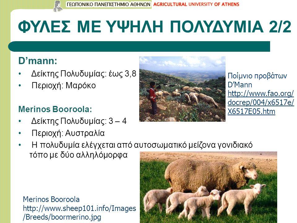 ΦΥΛΕΣ ΜΕ ΥΨΗΛΗ ΠΟΛΥΔΥΜΙΑ 2/2 D'mann: Δείκτης Πολυδυμίας: έως 3,8 Περιοχή: Μαρόκο Merinos Booroola: Δείκτης Πολυδυμίας: 3 – 4 Περιοχή: Αυστραλία Η πολυδυμία ελέγχεται από αυτοσωματικό μείζονα γονιδιακό τόπο με δύο αλληλόμορφα Merinos Booroola http://www.sheep101.info/Images /Breeds/boormerino.jpg Ποίμνιο προβάτων D'Mann http://www.fao.org/ docrep/004/x6517e/ X6517E05.htm http://www.fao.org/ docrep/004/x6517e/ X6517E05.htm