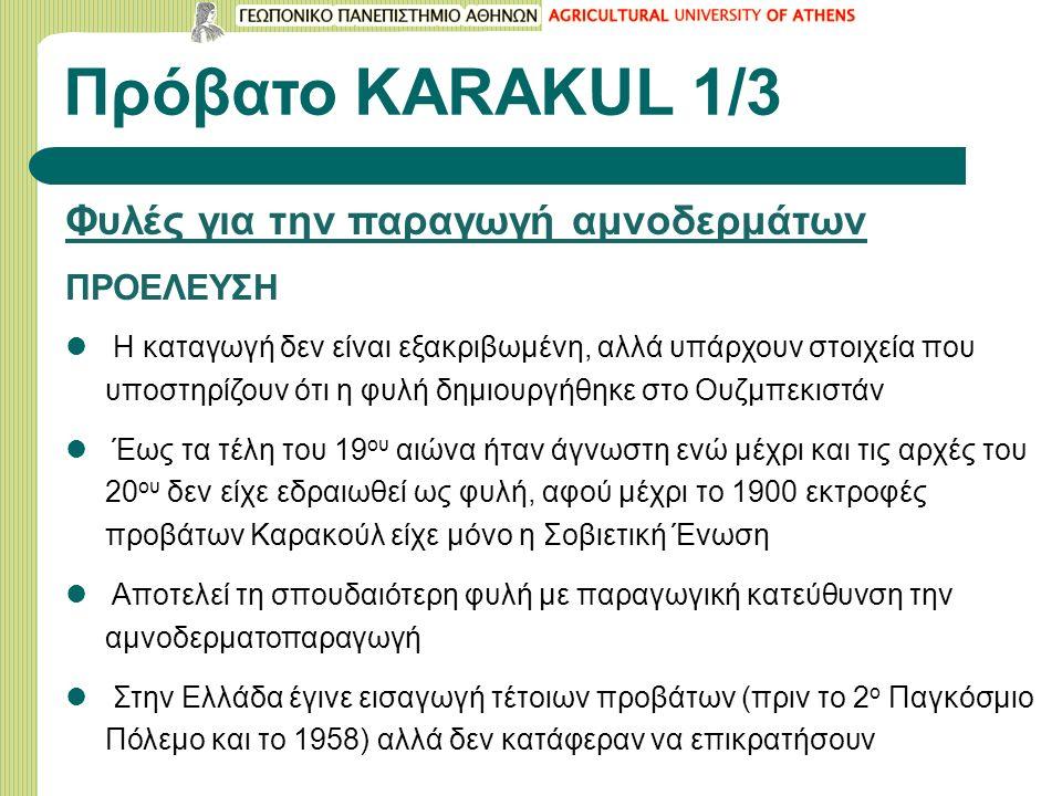 Πρόβατο KARAΚUL 1/3 Φυλές για την παραγωγή αμνοδερμάτων ΠΡΟΕΛΕΥΣΗ Η καταγωγή δεν είναι εξακριβωμένη, αλλά υπάρχουν στοιχεία που υποστηρίζουν ότι η φυλή δημιουργήθηκε στο Ουζμπεκιστάν Έως τα τέλη του 19 ου αιώνα ήταν άγνωστη ενώ μέχρι και τις αρχές του 20 ου δεν είχε εδραιωθεί ως φυλή, αφού μέχρι το 1900 εκτροφές προβάτων Καρακούλ είχε μόνο η Σοβιετική Ένωση Αποτελεί τη σπουδαιότερη φυλή με παραγωγική κατεύθυνση την αμνοδερματοπαραγωγή Στην Ελλάδα έγινε εισαγωγή τέτοιων προβάτων (πριν το 2 ο Παγκόσμιο Πόλεμο και το 1958) αλλά δεν κατάφεραν να επικρατήσουν