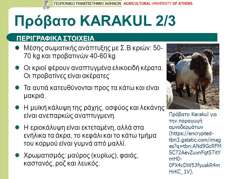 Πρόβατο KARAΚUL 2/3 Μέσης σωματικής ανάπτυξης με Σ.Β κριών: 50- 70 kg και προβατινών 40-60 kg Οι κριοί φέρουν αναπτυγμένα ελικοειδή κέρατα. Οι προβατί