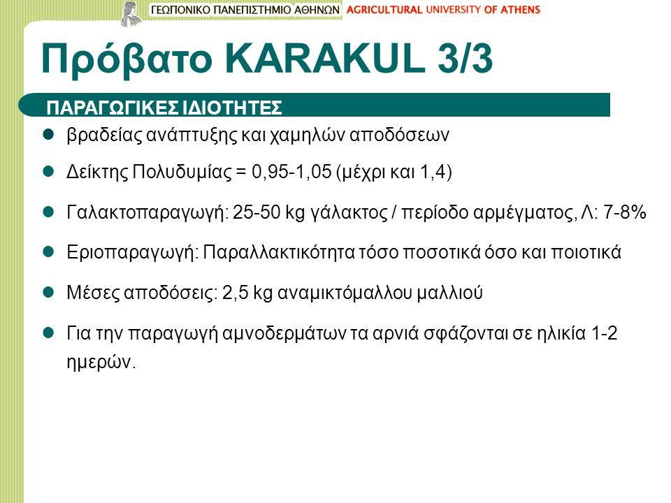 Πρόβατο KARAΚUL 3/3 βραδείας ανάπτυξης και χαμηλών αποδόσεων Δείκτης Πολυδυμίας = 0,95-1,05 (μέχρι και 1,4) Γαλακτοπαραγωγή: 25-50 kg γάλακτος / περίο