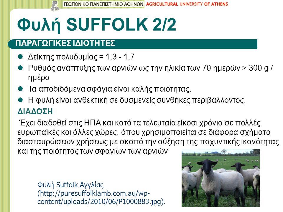 Φυλή SUFFOLK 2/2 Δείκτης πολυδυμίας = 1,3 - 1,7 Ρυθμός ανάπτυξης των αρνιών ως την ηλικία των 70 ημερών > 300 g / ημέρα Τα αποδιδόμενα σφάγια είναι καλής ποιότητας.