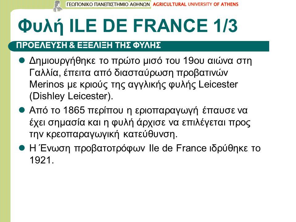 Φυλή ILΕ DE FRANCE 1/3 Δημιουργήθηκε το πρώτο μισό του 19ου αιώνα στη Γαλλία, έπειτα από διασταύρωση προβατινών Merinos με κριούς της αγγλικής φυλής L