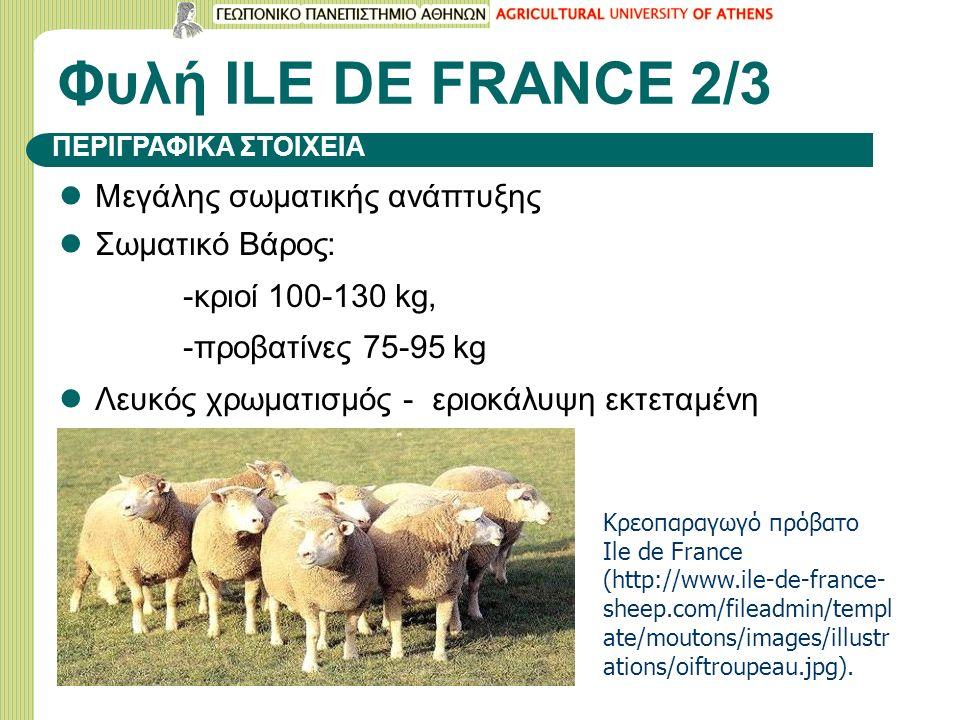 Φυλή ILΕ DE FRANCE 2/3 Μεγάλης σωματικής ανάπτυξης Σωματικό Βάρος: -κριοί 100-130 kg, -προβατίνες 75-95 kg Λευκός χρωματισμός - εριοκάλυψη εκτεταμένη ΠΕΡΙΓΡΑΦΙΚΑ ΣΤΟΙΧΕΙΑ Κρεοπαραγωγό πρόβατο Ile de France (http://www.ile-de-france- sheep.com/fileadmin/templ ate/moutons/images/illustr ations/oiftroupeau.jpg).