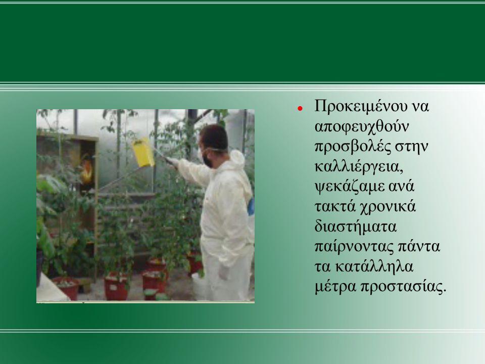 Προκειμένου να αποφευχθούν προσβολές στην καλλιέργεια, ψεκάζαμε ανά τακτά χρονικά διαστήματα παίρνοντας πάντα τα κατάλληλα μέτρα προστασίας.
