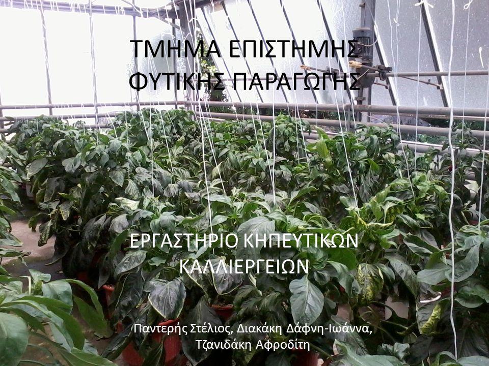 ΘΕΡΜΟΚΗΠΙΑΚΕΣ ΚΑΛΛΙΕΡΓΕΙΕΣ ΠΙΠΕΡΙΑ Capsicum annuum ΜΠΑΜΙΑ Hibiscus esculentus